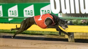 Sky Racing World launches Australian greyhound simulcasting in US